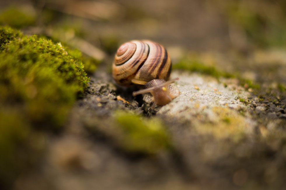 Snail-with-house-on-the-back-free-license-CC0-980x652